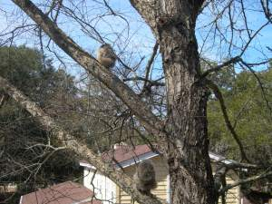 feb 22 safe on branches 002
