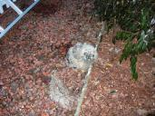 Owlet down 7th time Feb 23 002