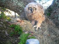 Owlet down 7th time Feb 23 007