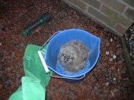 owlet down feb 21 003