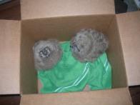 Owlets Down Feb 22 OMG 009