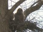 Standing up in original nest