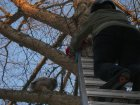 Sibling owlet being deposited above