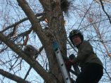 Falle owlet placed on branch above Klingon