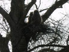 Owlets morning Feb 20 002