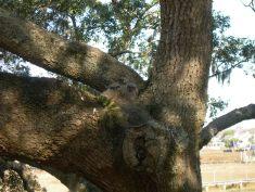 Owlets new address feb 24 002