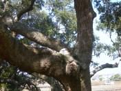 Owlets new address feb 24 023
