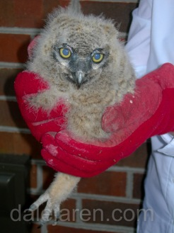 Code Red Owlet Down February 22