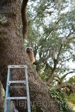 Back in the tree? After that long journey? Crap. Déjà vu all over again..