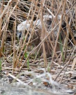 In the marsh, natural GPS?