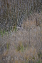 mar 15 marsh gps--