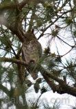 mar 16 parent in front pine tree HF-