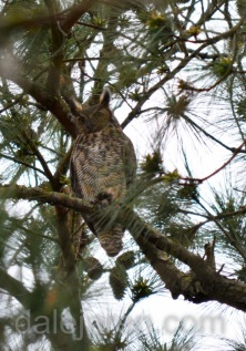 mar 16 parent in front pine tree HF-