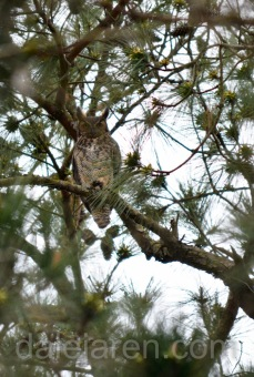 Mar 16 parent on watch front pines
