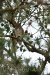 mar 16 parent own watching front pines