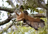 mar 16 talon caught feature photo can't be good