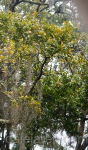 Mar 17 hide and seek in the trees
