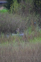 MiniMe is squawking in the marsh