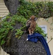 Mar 17 MM is in tree w blanket it has been a very long morning