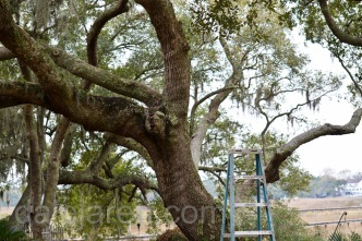 Mar 19 Empty nest with ladder