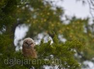 Mar 19 MM cedar dons pines so close nice
