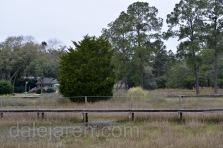 Cedar Tree on easement