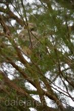 Mar 19 MM in Cedar Tree 1