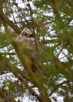 Hiding in the Cedar Tree