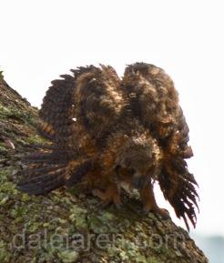 Mar 20 MM examination over in tree flaring