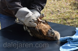 Debbie demonstrates how to hold the owlet for examination