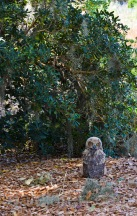 I am determined to be a marsh owlet