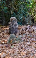 Mar 20 MM is a marsh owl please
