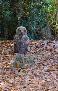 Mar 20 MM is a marsh owl please