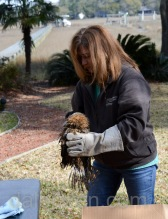 Debbie Mauney retrieves the owlet from the box so she can examine it for injuries