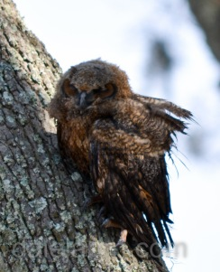 i can barely hang on. I really want to be a marsh owl.