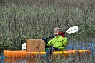 Too bad my foster parent cannot fly as well as she can paddle