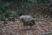 Mar 25 mm heads to garden squawking for dinner