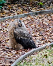 Mar 25 mm in garden looking for parents- devine intervention-