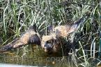 Mar 26 mm just beforenear fatal swan dive