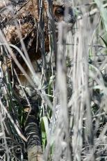 Mar 26 mn please grab the bamboo pole
