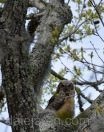 Mar 27 other in fav tree gum tree