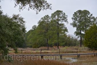 Tall pines on high marsh island. Parent Hangout