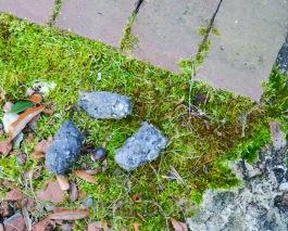 Three owlet pellets