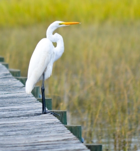 Egret cropping